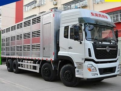 东风天龙9米6拉猪车第一段视频