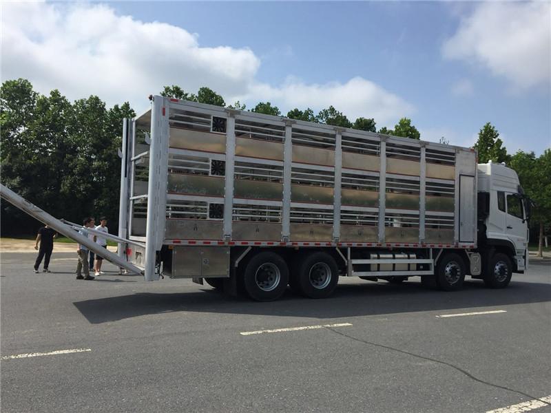 畜禽车东风天龙运猪车厂家批量发车了视频