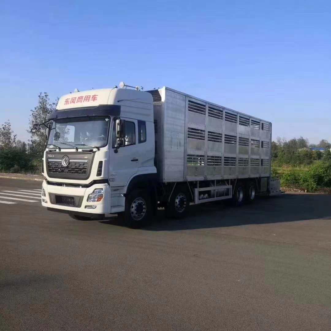国六东风前四后八畜牧运输车,运猪车厂家视频